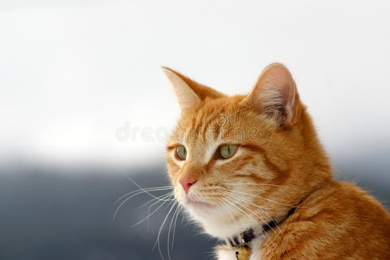 Download Stalker 7 stock photo. Image of cats, stalk, tiger, cautious - 611630