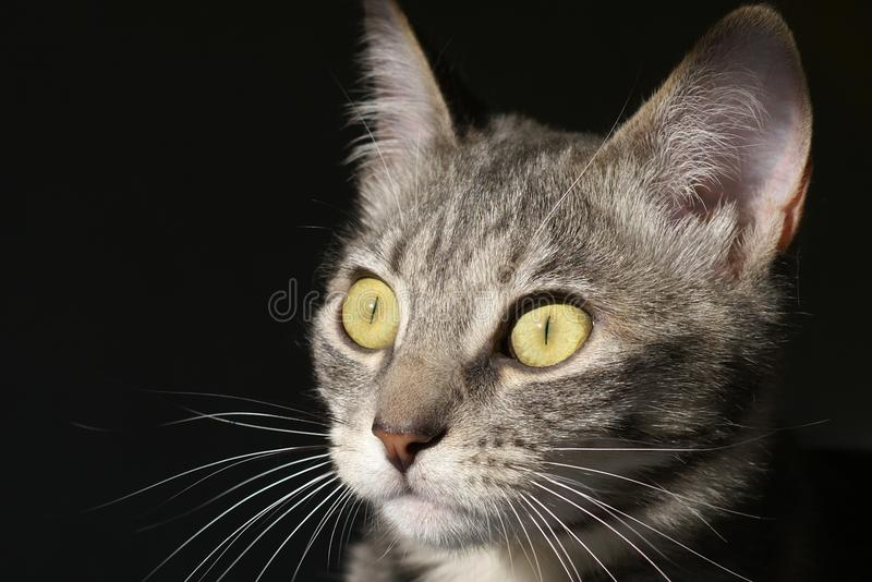 Stalking Kitty Cat Royalty Free Stock Photography