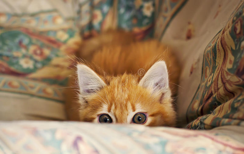 Download Stalking little kitten stock photo. Image of furry, funny - 39953634