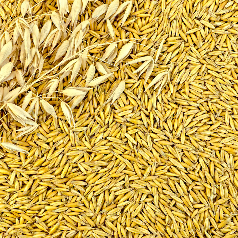 Texture from oat grains with stalks stock images