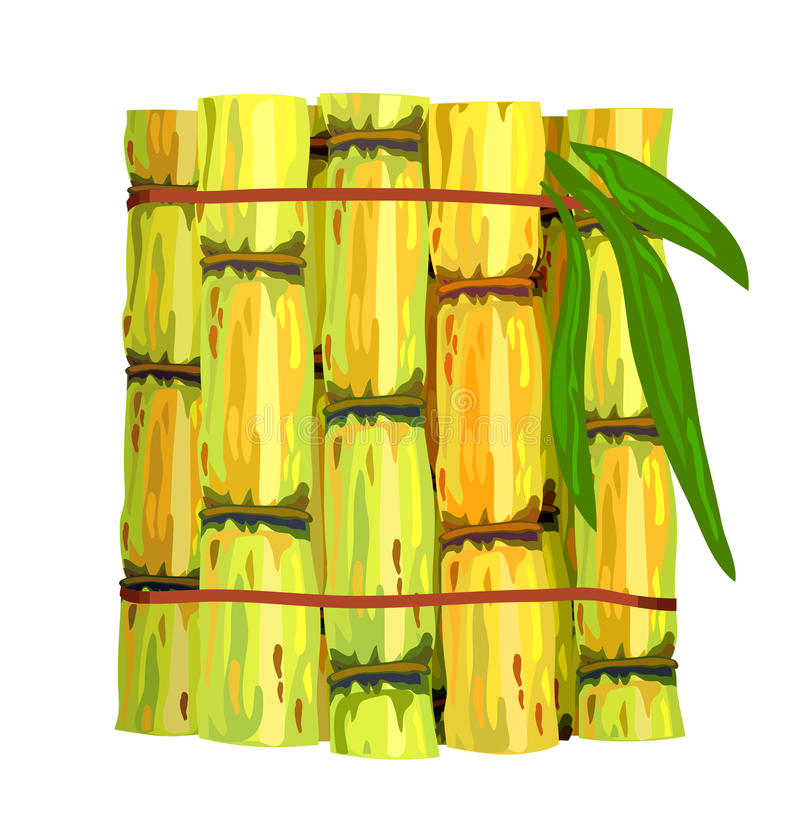 Download Stalks Of Sugar Cane. Stock Photography - Image: 22016852