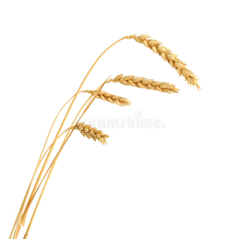Download Stalks Of Wheat Ears Stock Photography - Image: 26499052