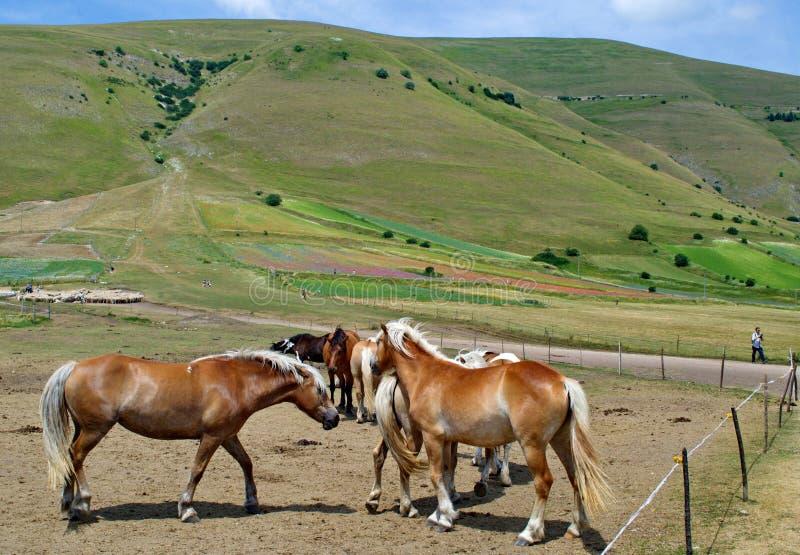 Stalla della montagna del cavallo fotografia stock libera da diritti