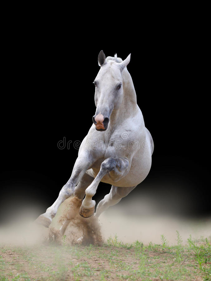 Download Stallion in dust stock image. Image of hoofed, beast - 16028775