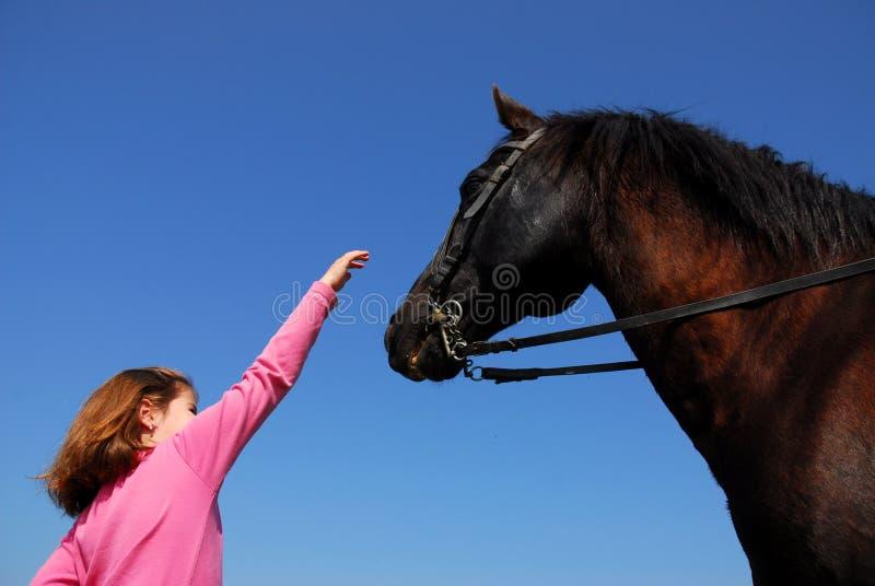 Stallion e bambina del Brown fotografia stock