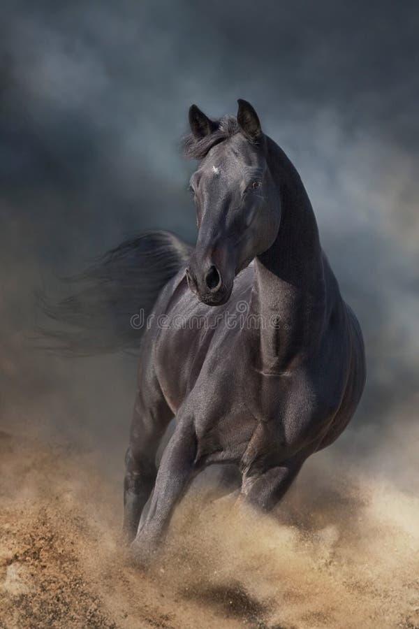 Free Stallion On Dark Desert Storm Royalty Free Stock Photo - 200544655