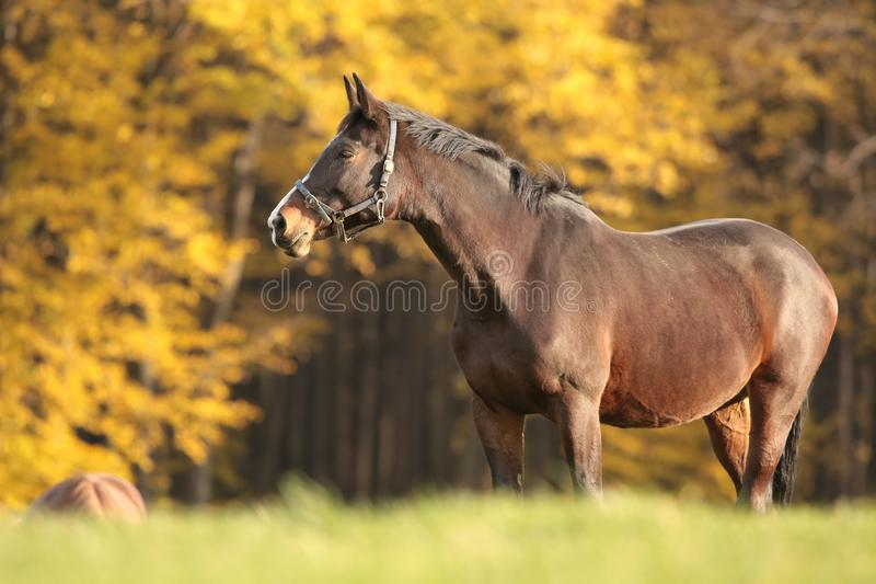 Horse on a meadow at dusk royalty free stock photography