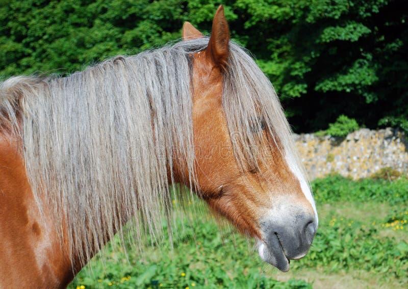 Stallion portrait stock photos