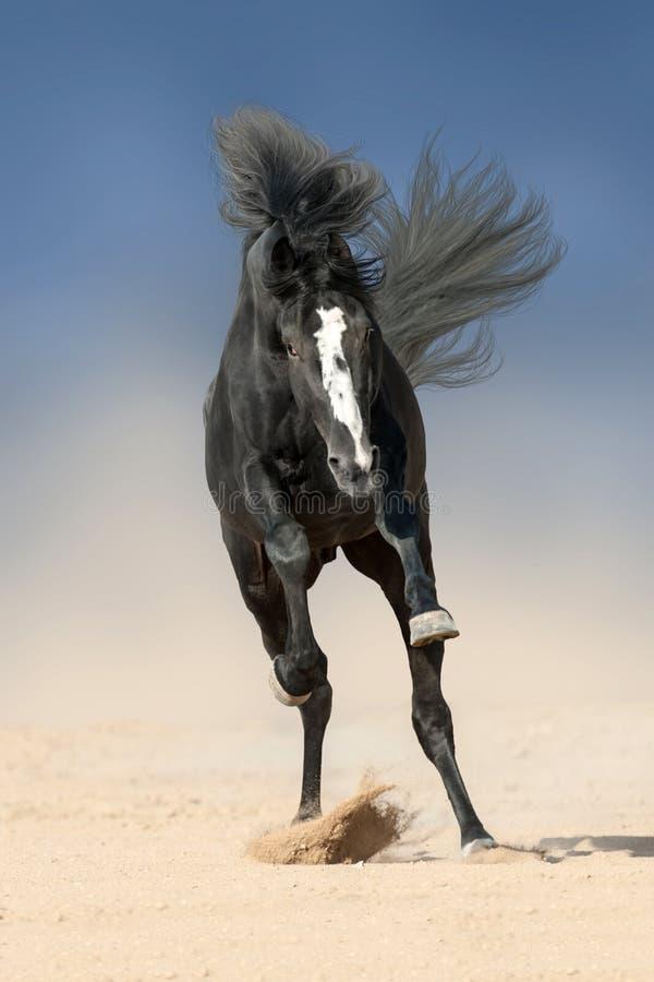 Stallion run fast stock photos