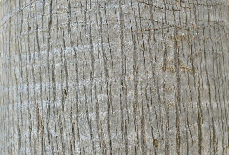Stam av en palmträd royaltyfri foto