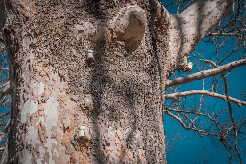 Stam av trädet som har en gammal elektrisk service royaltyfria bilder
