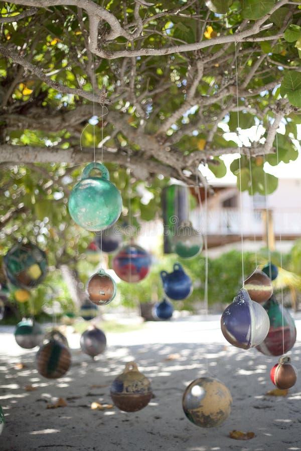 Stam- Belize royaltyfria foton