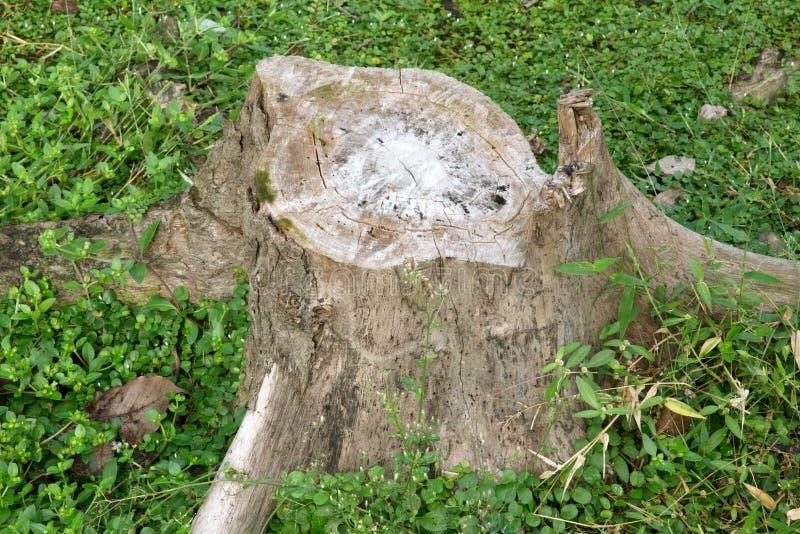 Stam van boom stock afbeeldingen