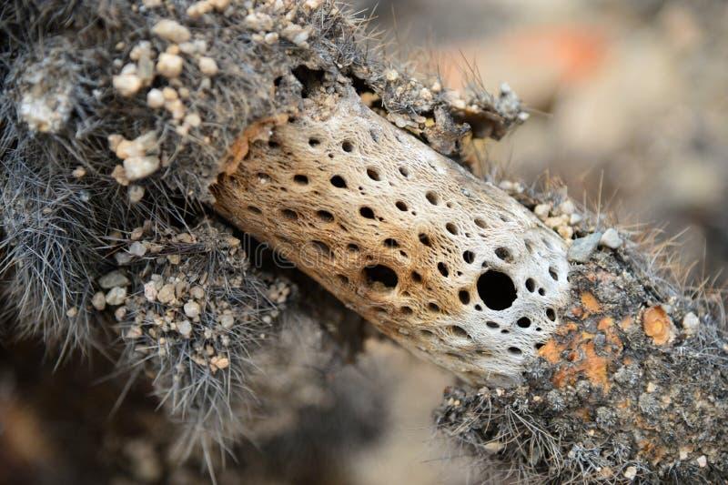 Stam van cactus in Joshua Tree National Park stock afbeelding