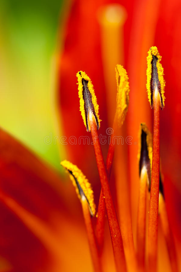 Download Stamen Stock Image - Image: 21256921