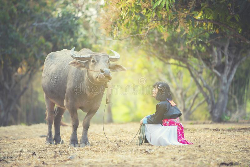 Stamflickaintelligens på knä med vattenbuffeln i fält royaltyfri fotografi