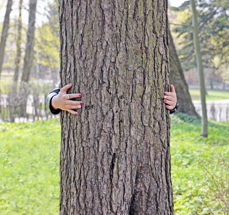 Stamm der großen alten Kiefer und der Hand des Frauenumfassungsbaums stockfotografie