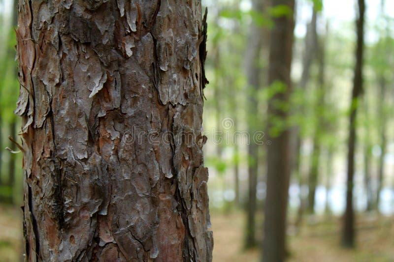 Stamm des Baums stockbild