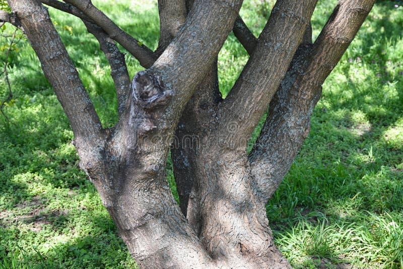 Stamm eines alten Baums im Wald stockfotos