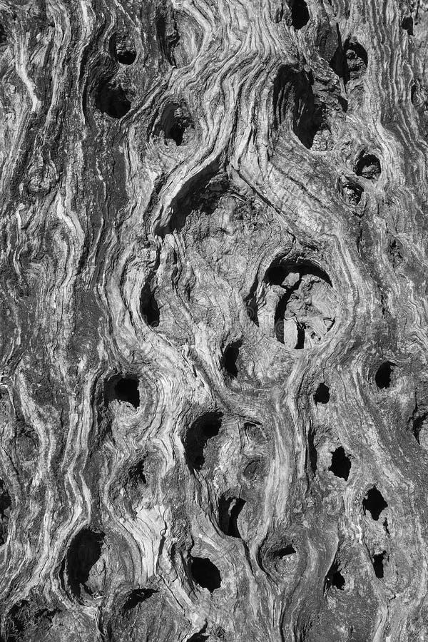 Stamm eines alten Olivenbaums (Hintergrund, Beschaffenheit) lizenzfreie stockfotografie