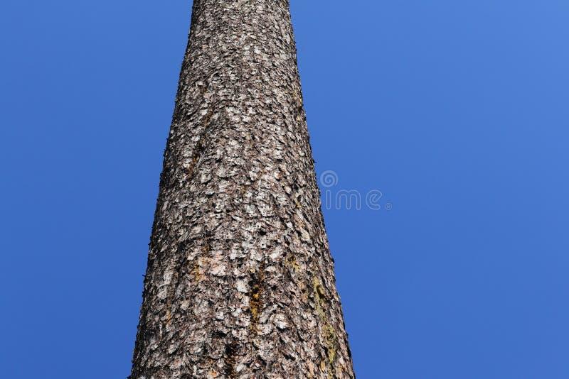 Stamm eines Baums stockbilder
