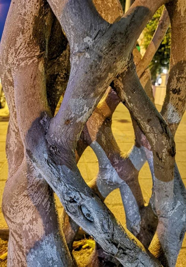 Stamm-förmiger tropischer Baum lizenzfreie stockbilder