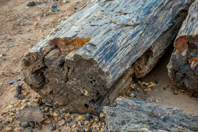 Stammar för förstenat trä i stenöknen i Sudan arkivbild