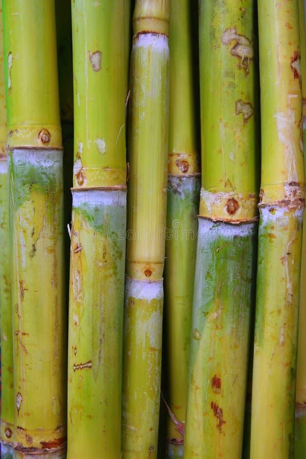 stammar för socker för green för bamburottingmat fotografering för bildbyråer