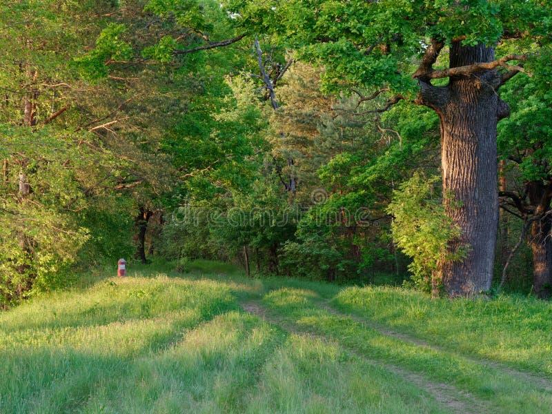 Stammar för vägskogträd på en grön bakgrund arkivbild