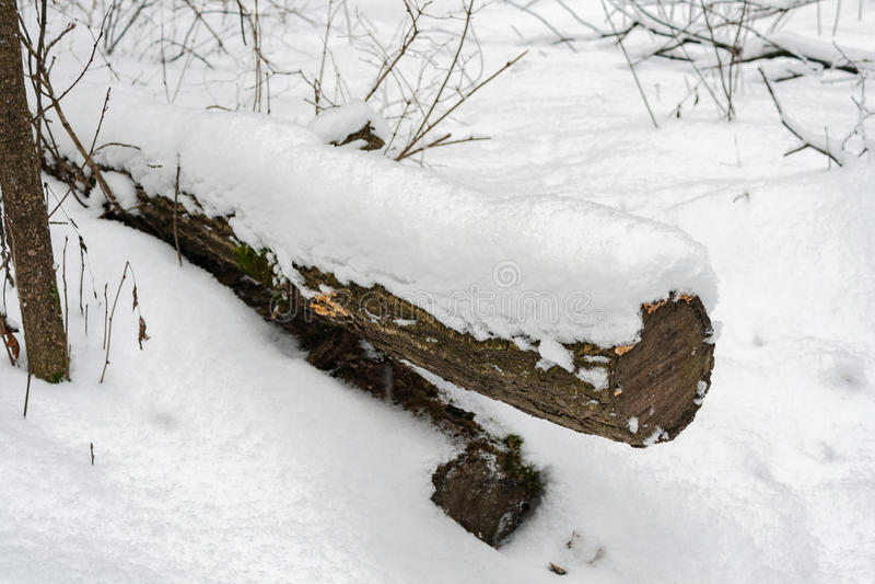 Stammen av ett avverkat träd som täckas med den insnöade vinterskogen royaltyfria foton