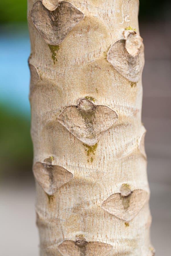 Stammen, bloemen en papajabomen royalty-vrije stock foto's