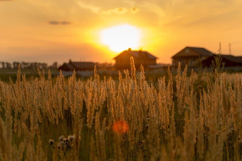 Stammen van gras bij zonsondergang Kan als achtergrond worden gebruikt royalty-vrije stock foto's