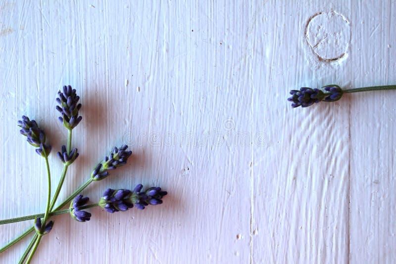 Stammen van lavander stock fotografie