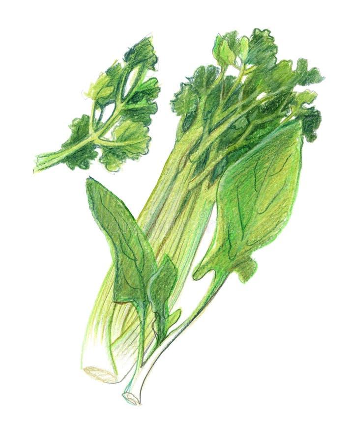 Stammen van selderie, bladeren van spinazie en peterselie r Ge?soleerdj op witte achtergrond vector illustratie