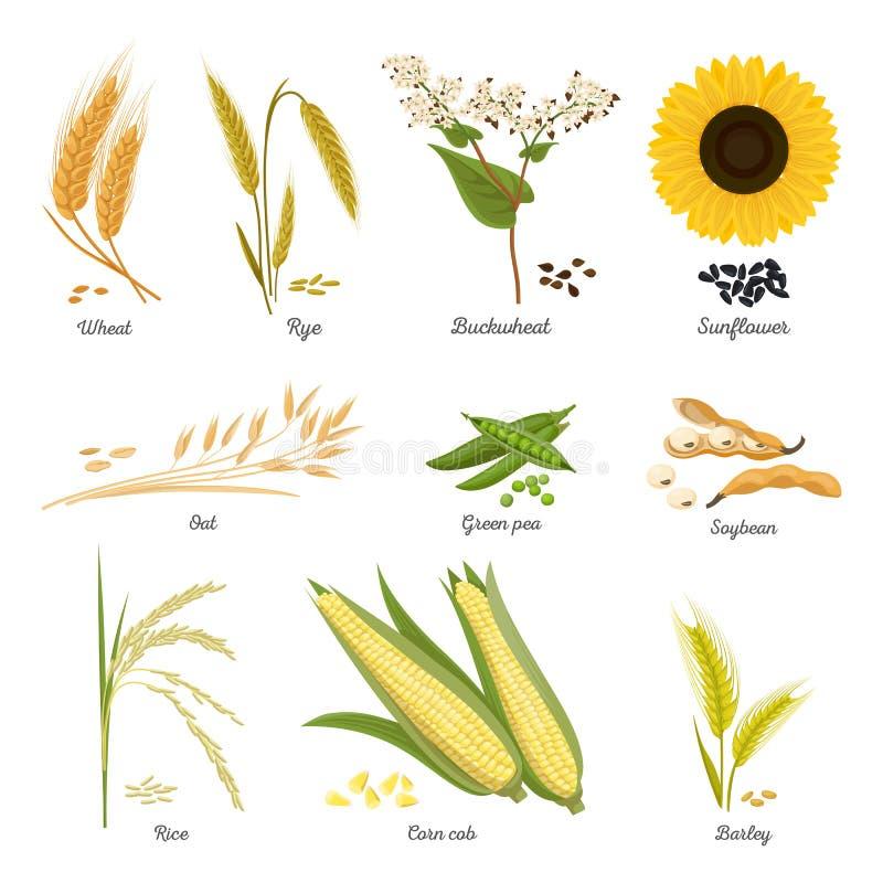 Stammen van tarwe en rogge, zonnebloem en erwtenvoedsel vector illustratie