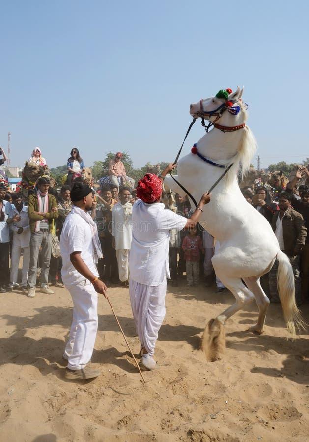Stammes- Nomademann, der ehrlich am Pferdetanzwettbewerb am berühmten Vieh, Indien teilnimmt lizenzfreie stockfotografie