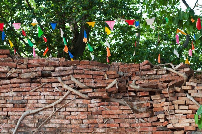 Stammwurzeln des Ficus eine Backsteinmauer bedeckend stockfoto