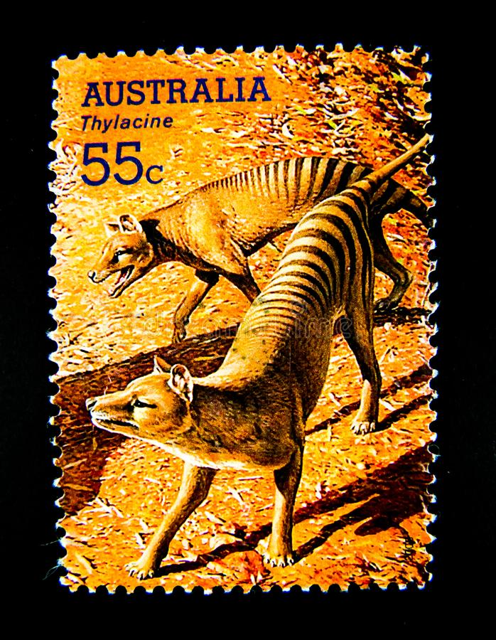 A stamp printed in Australia shows an image of Thylacine Tasmanian tiger on value at 55 cent. BANGKOK, THAILAND. – On June 1, 2018 - A stamp printed in royalty free stock image
