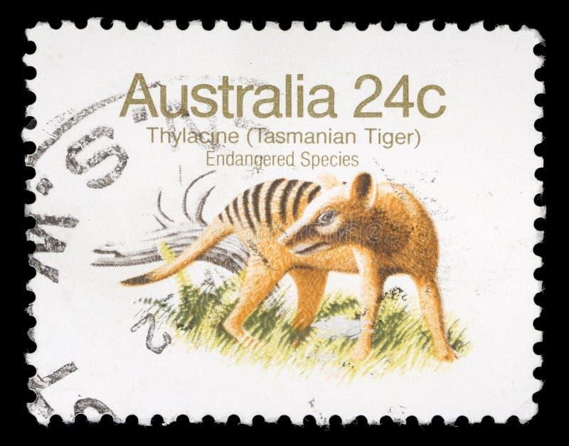 Stamp printed in Australia shows Tasmanian Tiger royalty free stock photos