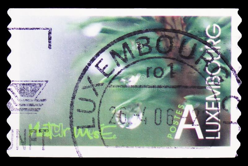 A stamp printed in Luxembourg shows National Museum of Natural History, Nature serie, circa 2002. MOSCOW, RUSSIA - MARCH 23, 2019: A stamp printed in Luxembourg royalty free stock photos