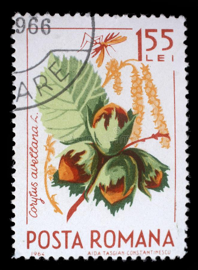 Stamp printed in the Romania shows Hazelnuts. A stamp printed in the Romania shows Hazelnuts, Corylus Avelana, Common Hazel, Natural Fruit, circa 1964 stock image