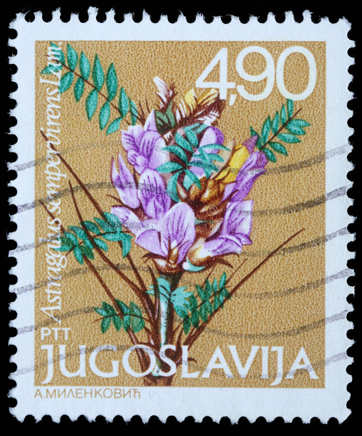 Stamp printed in Yugoslavia shows Astragalus sempervirens Lam. Series, circa 1980 royalty free stock image