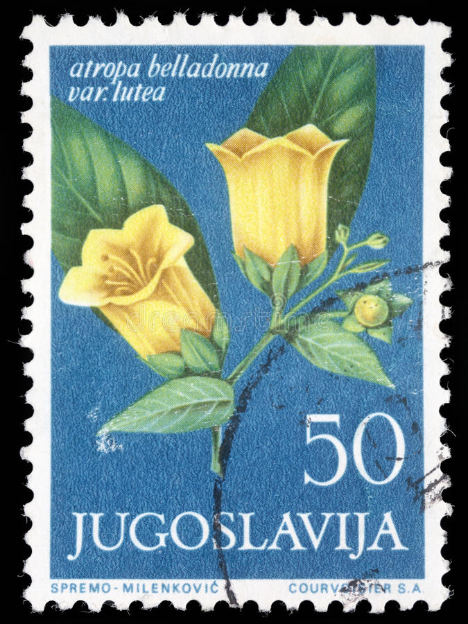 Stamp printed in Yugoslavia shows atropa belladonna. Series, circa 1958 stock photography