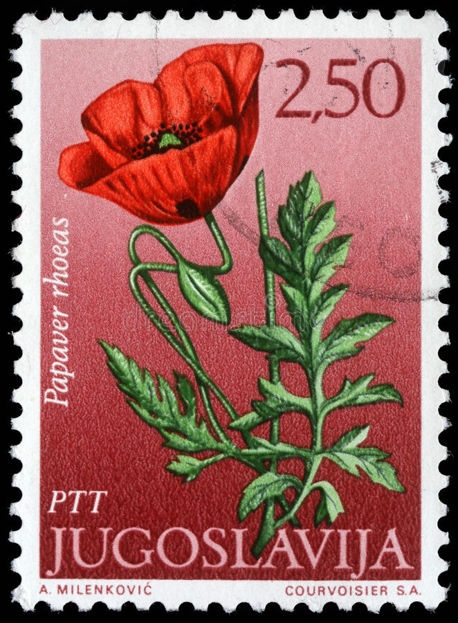 Stamp printed in Yugoslavia shows field poppy. Series, circa 1970 royalty free stock photography