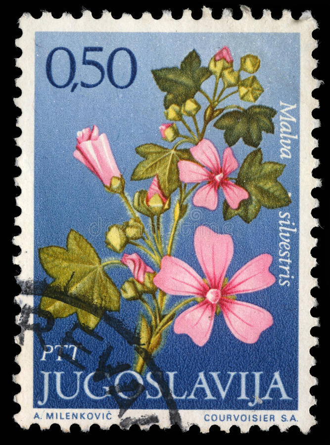 Stamp printed in Yugoslavia shows genus Malva stock photos