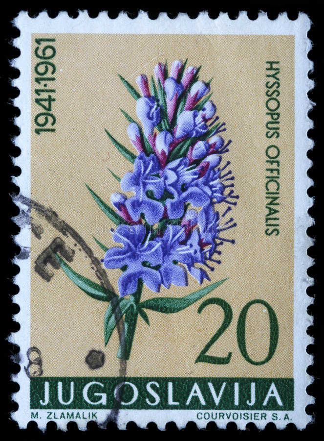 Stamp printed in Yugoslavia shows hyssop stock image