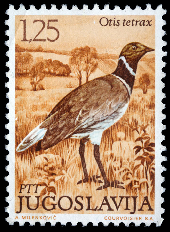 Stamp printed in Yugoslavia shows the Little Bustard royalty free stock images