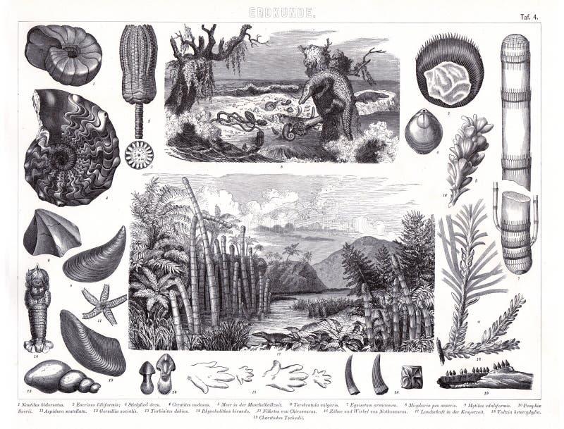 Stampa antica 1874 delle piante di Prheistoric degli animali giurassici e cambriani di periodo e illustrazione vettoriale