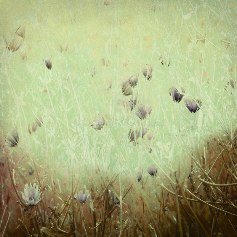 Stampa del Wildflower su documento antico immagine stock
