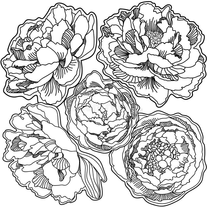 Stampa dell'ornamento del fondo delle peonie di fioritura immagine stock libera da diritti